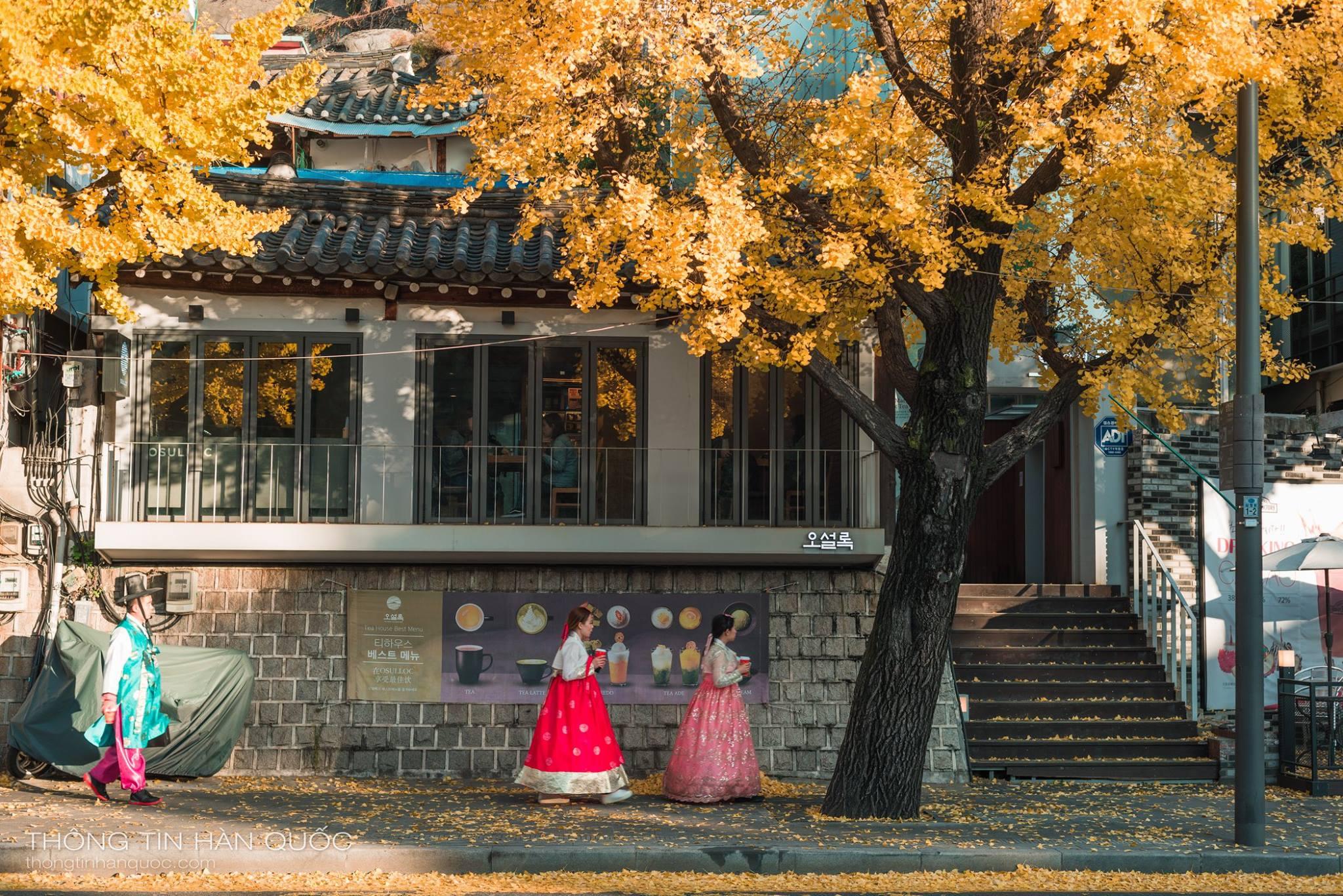 3 địa điểm ngắm mùa thu tuyệt đẹp ở Hàn Quốc