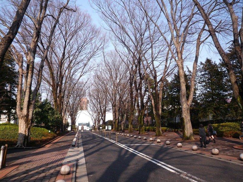 Quang cảnh trường đại học Seikei vô cùng đẹp mắt