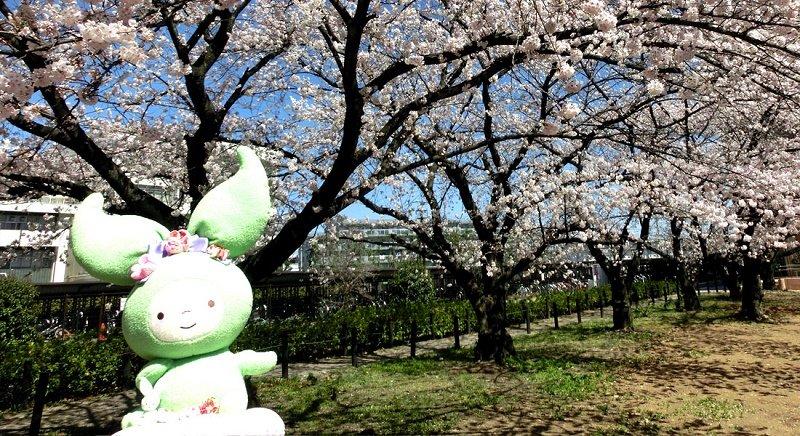 Tỷ lệ sinh viên trường đại học Saitama xin được việc rất cao