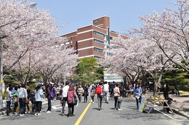 Đại học Silla Hàn Quốc thu hút nhiều sinh viên quốc tế
