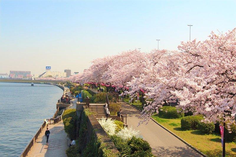 Sinh viên Việt Nam có nên đi du học Nhật Bản tự túc hay không?