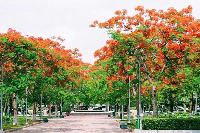 Hải Phòng – thành phố hoa phượng đỏ