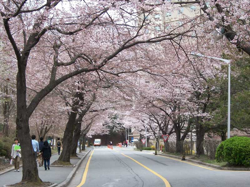 Khuôn viên hiện đại nhưng tràn ngập thiên nhiên của đại học Chungnam