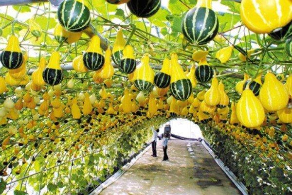 Du học Hàn Quốc ngành nông nghiệp