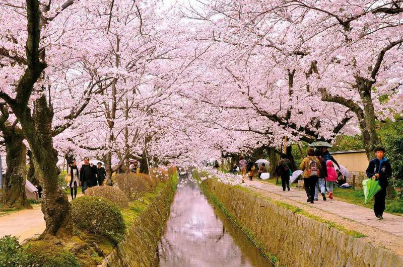 Vì sao nên du học Nhật Bản tháng 4 2019 và những điều cần biết